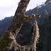 Aerofitos - aerophytes in trees (probably a type of Tillandsia); camino a Coicoyan de las Flores, Oaxaca, Mexico por Lon&Queta