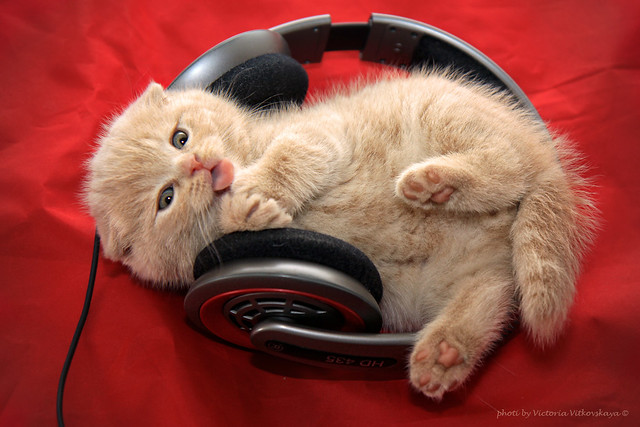 little cat enjoying music
