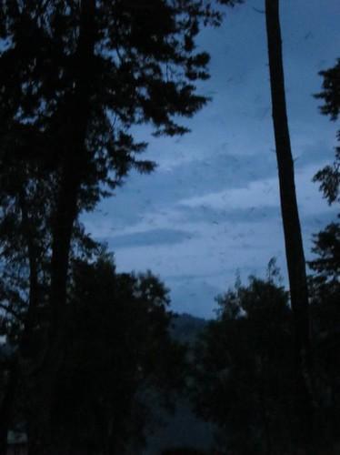 bats flying night uganda