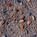 CB559 Pebbles by Lake Beltzville