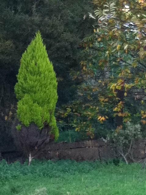Árbol bicolor