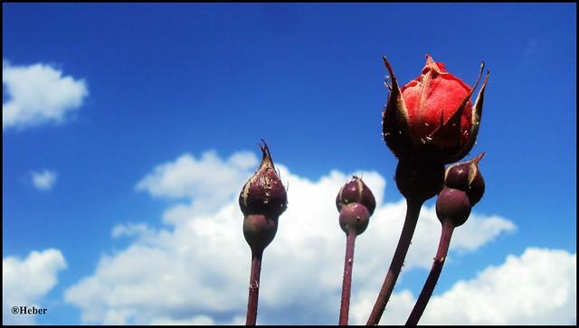 Fondos Nubes Rosas