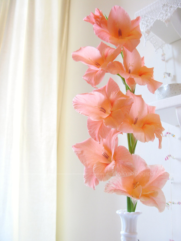 A perfect peachy pink Gladioli stem which sprouted up in our garden this November.