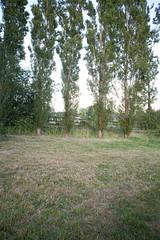 KJM-Gardens-0408