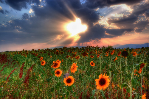 sunset sky clouds greece sunflowers drama ελλάδα σύννεφα δύση ουρανόσ δράμα ηλιοτρόπια