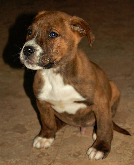 Dog Adoption Maryland Events