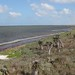 Small photo of Laguna Atascosa National Wildlife Refuge, Texas