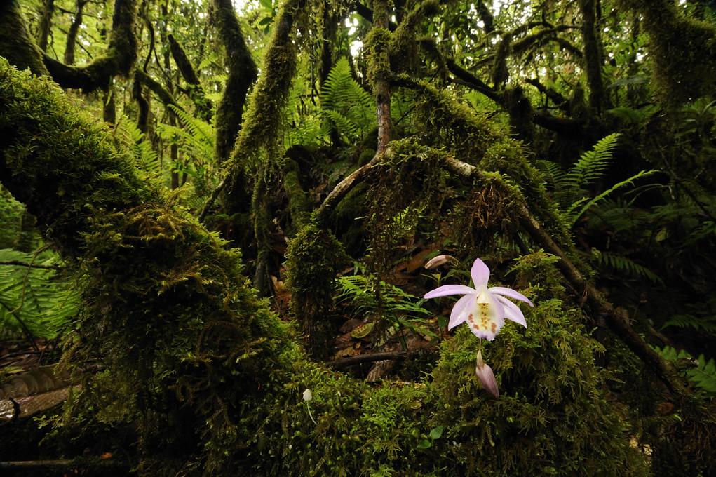 Carnivores et orchidées in situ  6004935629_e565eda035_b