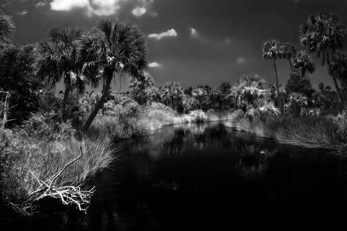 blackandwhite nature reflections palms landscape stream gulf florida saltmarsh nationalwildliferefuge suwannee gulfcoast lowersuwanneenationalwildliferefuge
