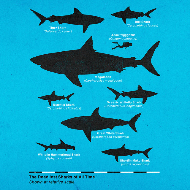 The Deadliest Sharks of All Time - a photo on Flickriver