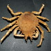 Spider Crabs - Photo (c) Bill & Mark Bell, some rights reserved (CC BY-NC-SA)