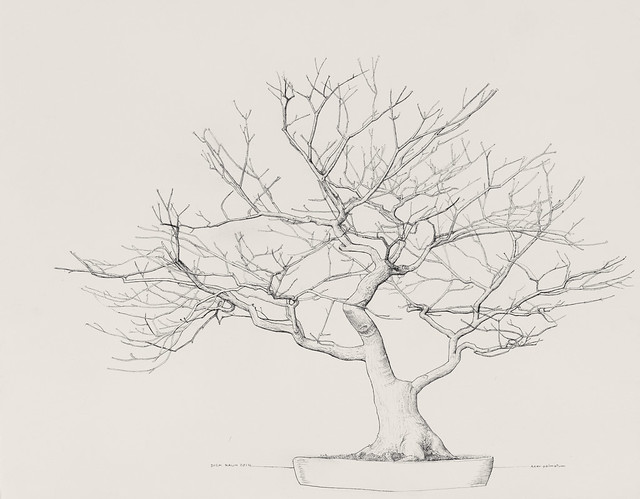 """Dick Rauh, Acer palmatum, 2010. C.V. Starr Bonsai Museum. Pen and ink on Arches 300lb. hot press. 16"""" x 20""""."""