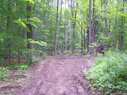 road forest state hiking timber hill tug tughill andyarthur