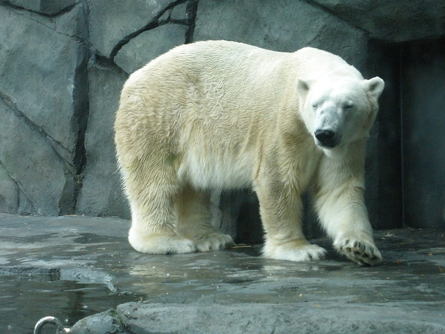 Polar Bear Outside
