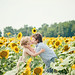 lssunflowers by untamed heart photo