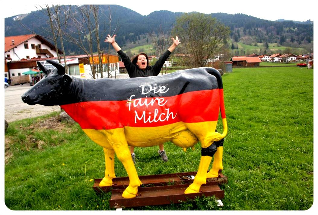 Cow with Jess