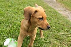 animal sports(0.0), puppy(0.0), black mouth cur(0.0), terrier(0.0), dog breed(1.0), animal(1.0), dog(1.0), pet(1.0), street dog(1.0), mammal(1.0),