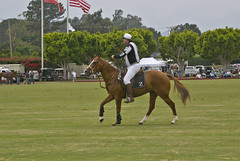 stick and ball games(0.0), english riding(0.0), dressage(0.0), jumping(0.0), show jumping(0.0), stick and ball sports(0.0), polo(0.0), endurance riding(0.0), ball game(0.0), animal sports(1.0), equestrianism(1.0), eventing(1.0), equestrian sport(1.0), sports(1.0), horse(1.0),
