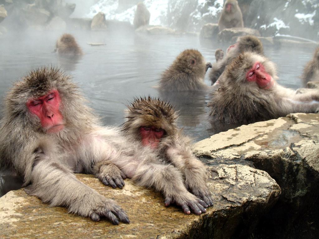 spa para monos