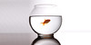 My Gold Fish
