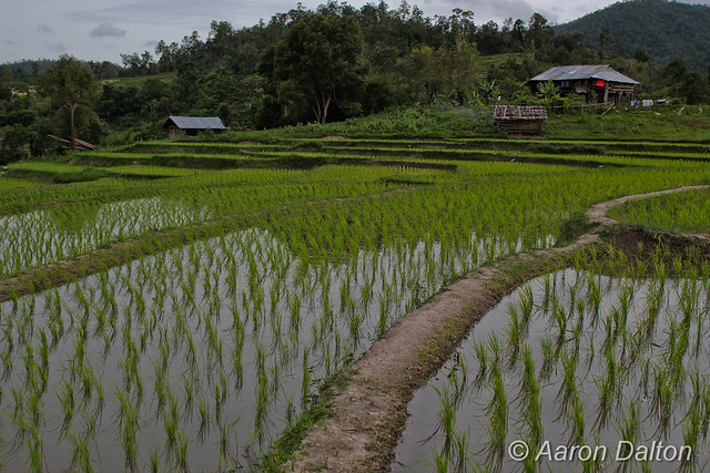 Terraced Rice Paddy Farm