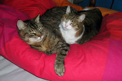 Robbe & Fatou on the Bed