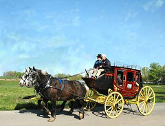 vehicle, pack animal, coachman, horse harness, horse and buggy, land vehicle, carriage,