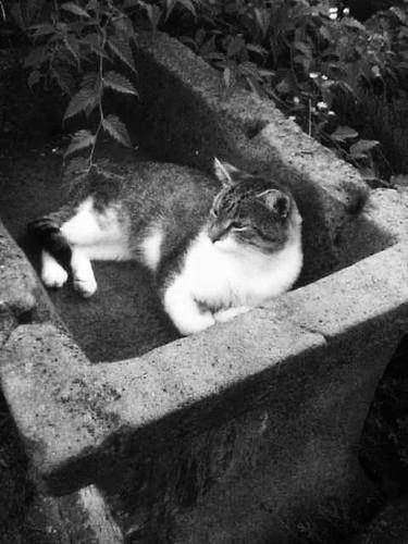 Cat resting in ...