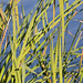 Ormond Beach Wetlands/ Grass 1614.5.j