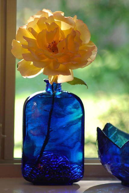 vase with peace rose