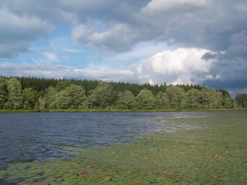 forest pond long state timber along longpond planation andyarthur