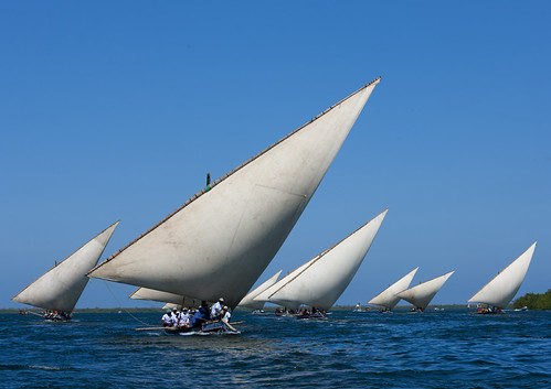Dohws during the Maulidi race - Lamu Kenya