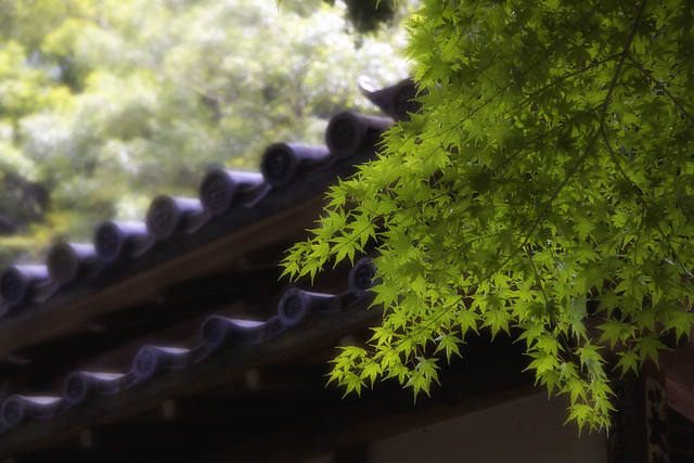 Leaves & Tiles At A Zen Temple