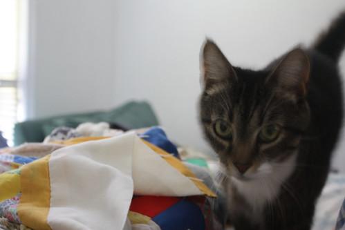 Pretty Kitty - Blur