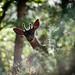 Muir Woods Deer by infiz