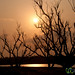 Sunrise Through Trees - Sundarbans, Bangladesh