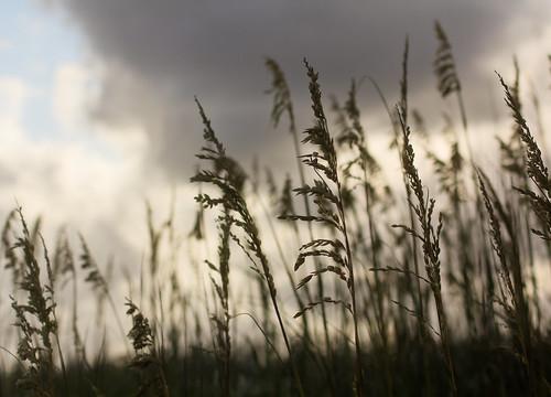 trip myrtlebeach wheat grain southcarolina pawleysisland