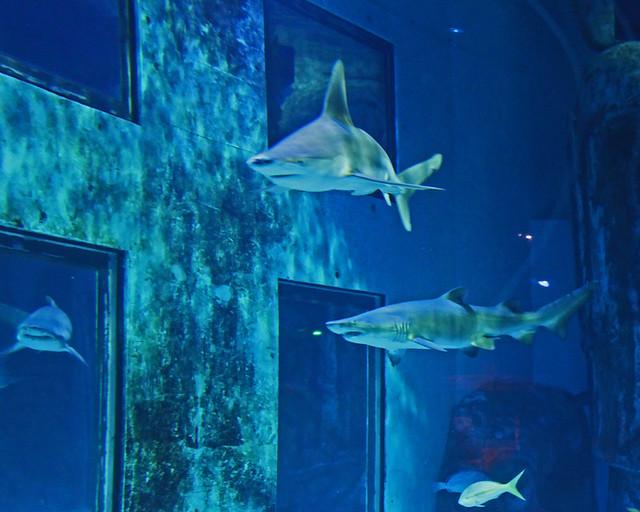 London Aquarium Sea Life Centre sharks