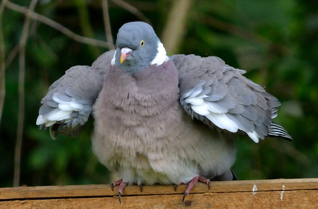 Funky Pigeon | Flickr - Photo Sharing!