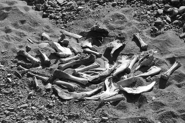 pile of bones | Flickr - Photo Sharing!