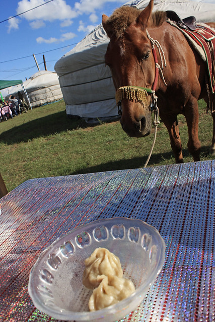 hungry Mongolia horse wants buuz by CC user istolethetv on Flickr