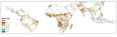 Map 3.1. Maize yields mapped by pixel across the global tropics.