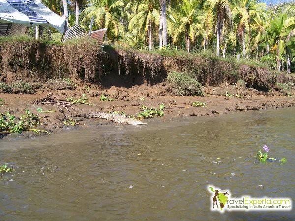 Costa Rica Wildlife - Animal Species Part 2