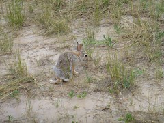 squirrel(0.0), coyote(0.0), bobcat(0.0), animal(1.0), hare(1.0), rodent(1.0), fauna(1.0), wildlife(1.0),