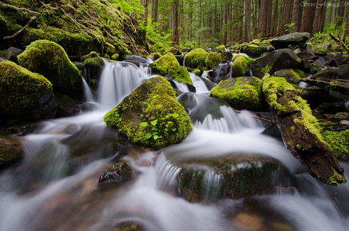 Sol Duc River Trail, Oylmpic National Park [Explored]