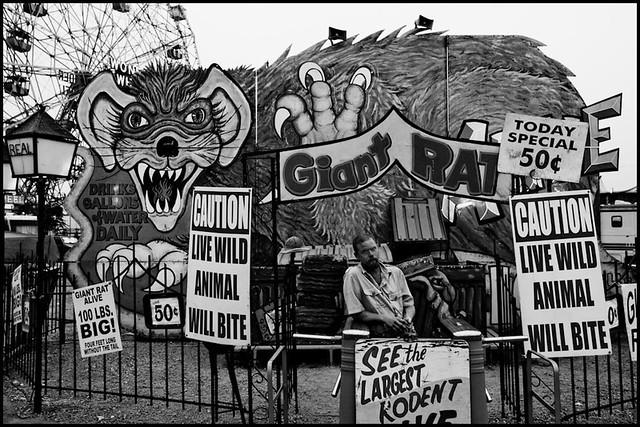 Giant Rat Coney Island