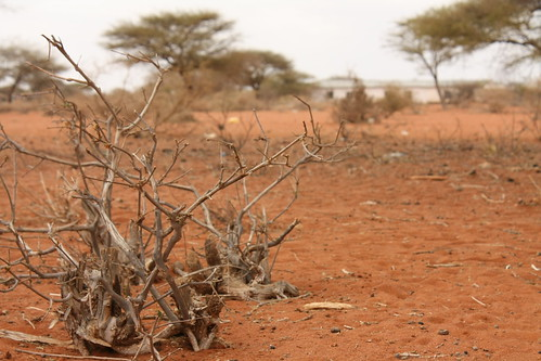 kenya drought livestock oxfam humanitarian ngo fooddistribution foodcrisis destocking