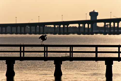 bridge sunset sky bird beach heron water sunrise mississippi pier crane wildlife seagull watertower biloxi egret gulfport gulfcoast oceansprings