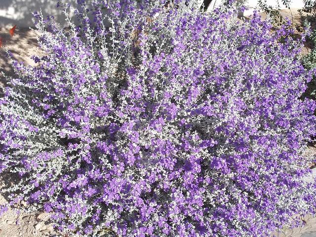 Backyard landscaping ideas southwest 2017 2018 best for Southwest landscaping plants