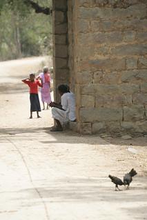 Chickens in Indian village